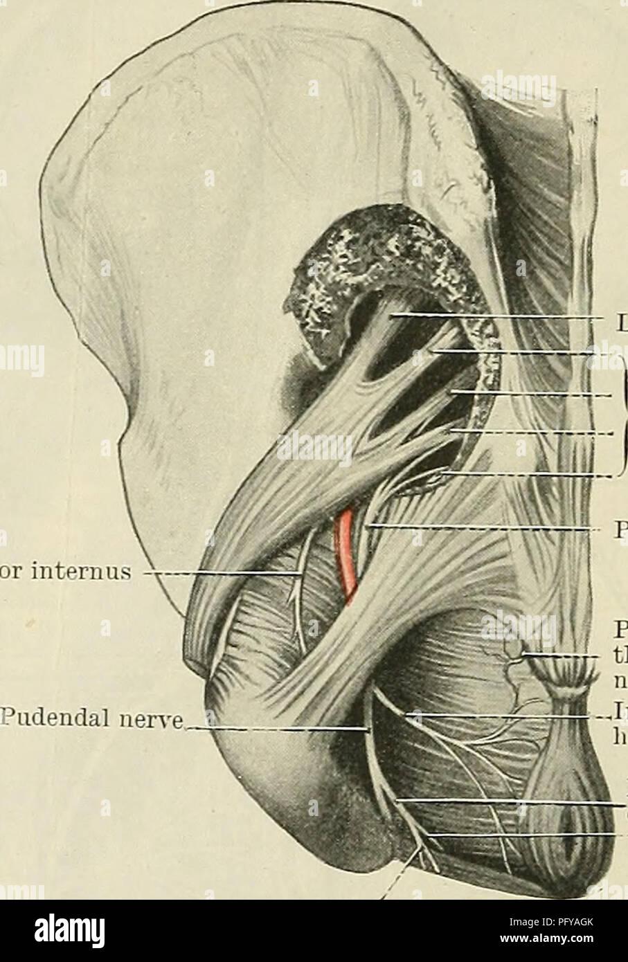 Urethras Imágenes De Stock & Urethras Fotos De Stock - Alamy