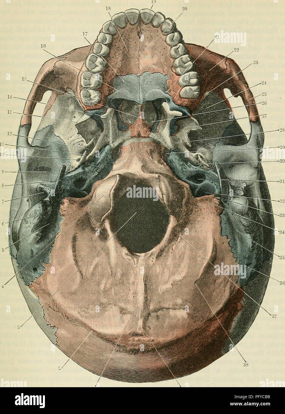 Asombroso Anatomía Cóndilo Occipital Imágenes - Anatomía y ...