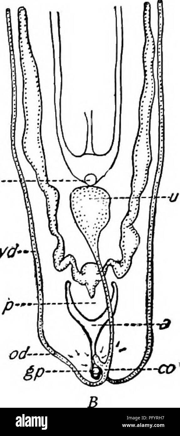 Biología De Agua Dulce Biología De Agua Dulce 356 89 Biología De
