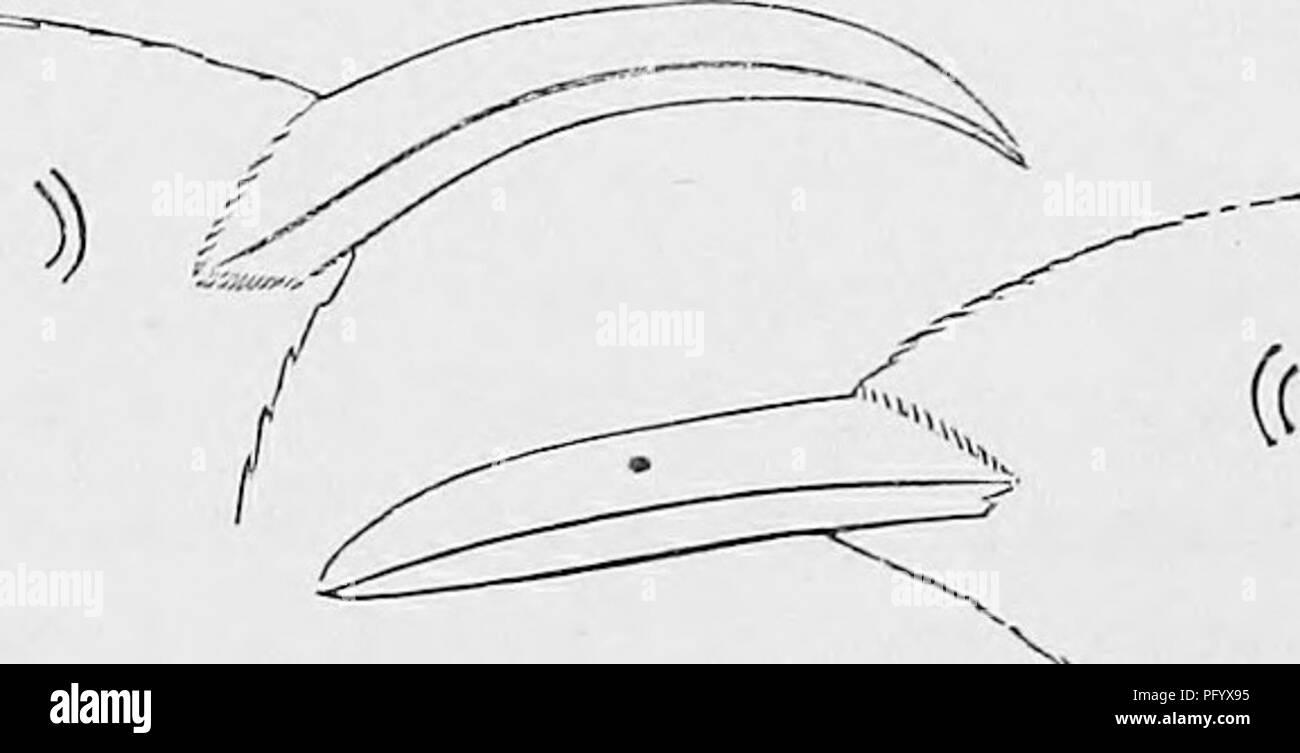 c5880ec5c99e Clave para las aves de América del Norte  contiene una reseña concisa de  cada .