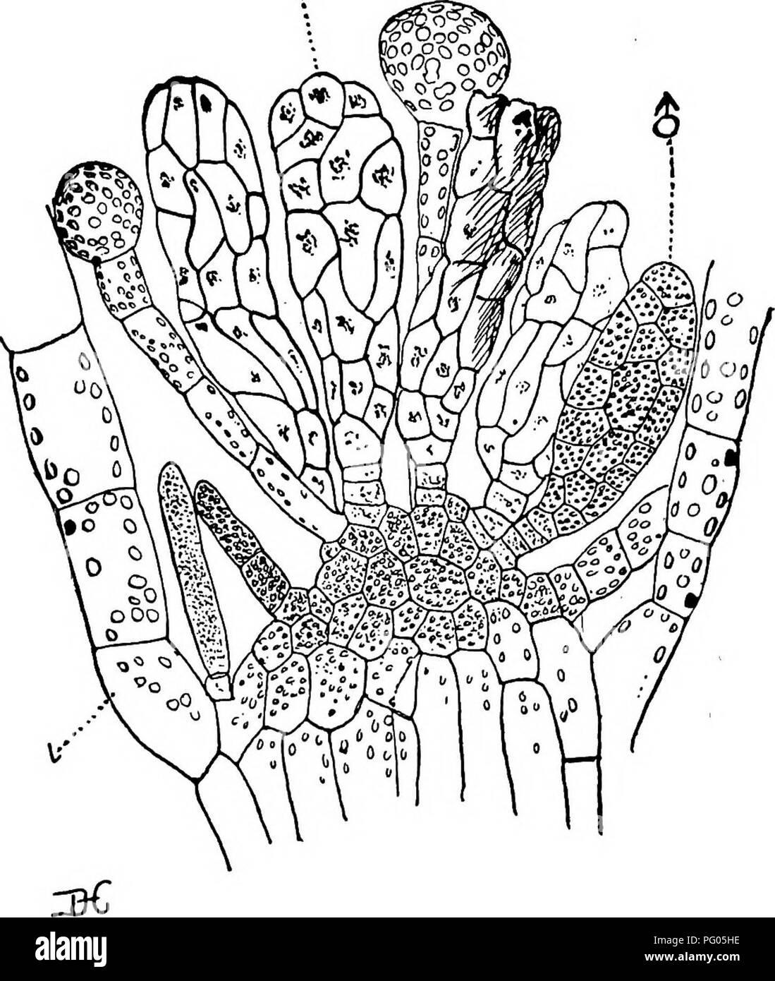 La Estructura Y El Desarrollo De Los Musgos Y Helechos
