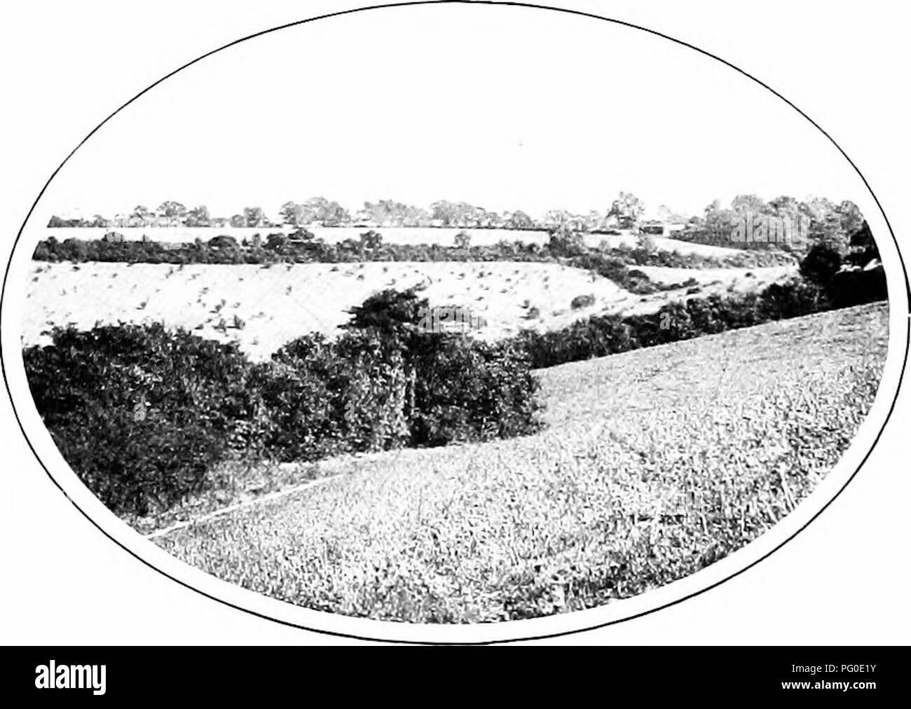 1a0dd80017 La naturaleza carol cantantes. Las aves. La naturaleza Carol cantantes.  campos y .