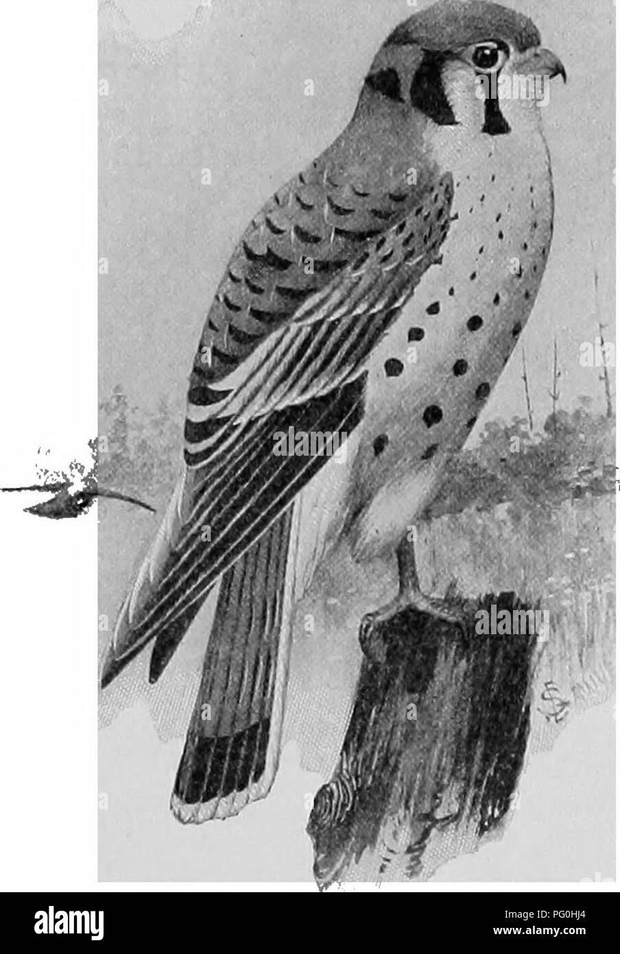 El Americano De Historia Natural Una Base De Conocimientos útiles