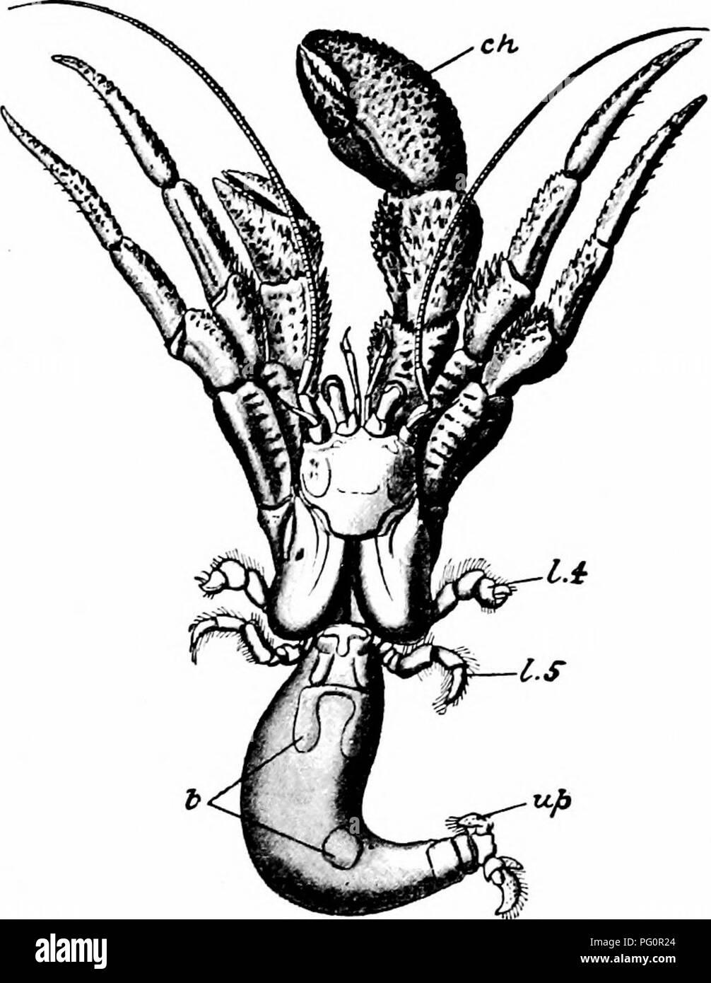 Un manual de zoología. PHYLUM ARTHROPODA 2jI los apéndices y las ...