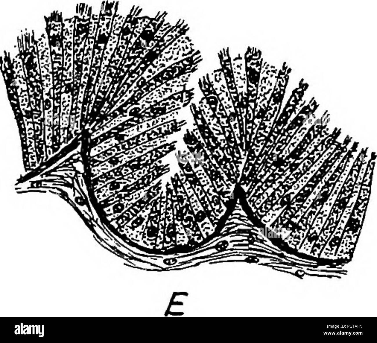 La Anatomía De Las Aves Domésticas Animales Domésticos
