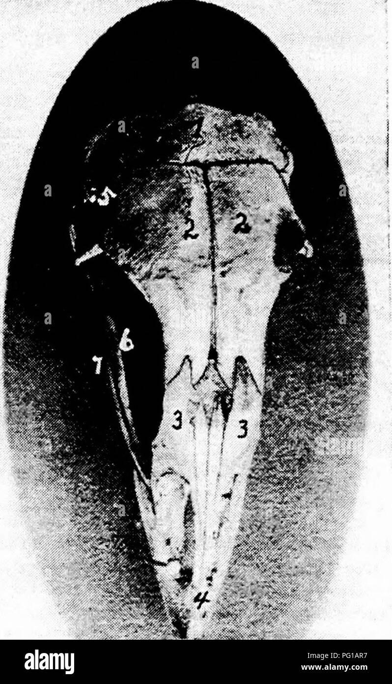Hermosa Anatomía Foramen Magnum Galería - Anatomía y Fisiología del ...
