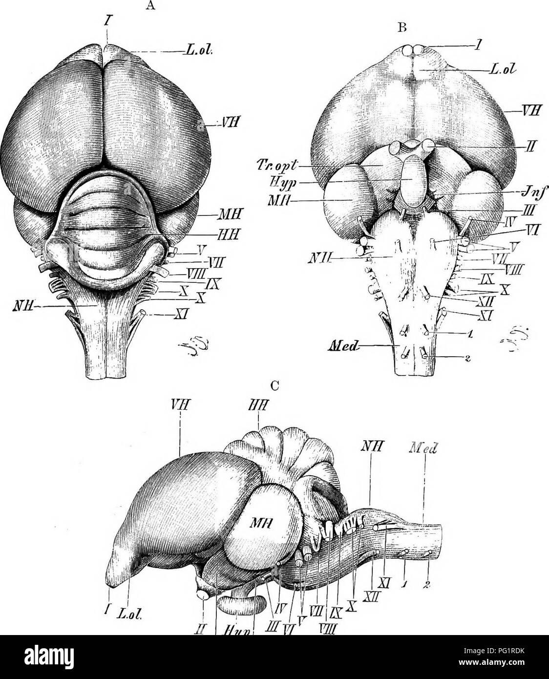 Encantador Vertebrados Comparativo Notas Anatomía De Conferencia ...