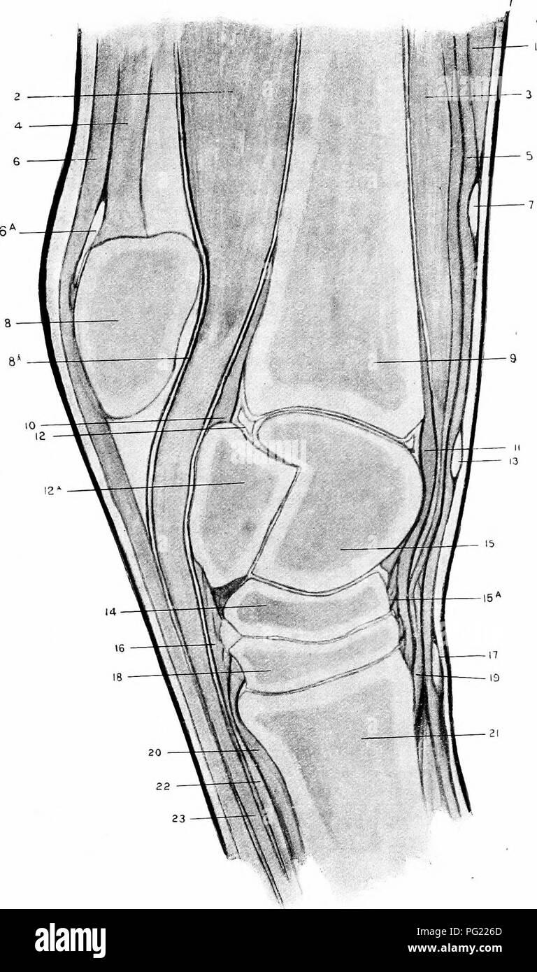 Anterior Longitudinal Ligament Imágenes De Stock & Anterior ...