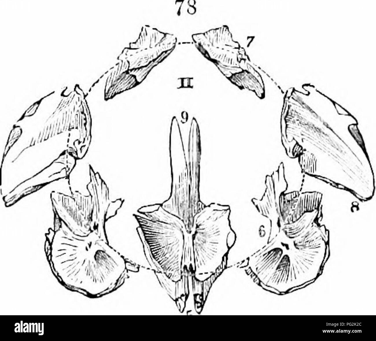 Bonito Anatomía De Lisp Fotos - Anatomía y Fisiología del Cuerpo ...