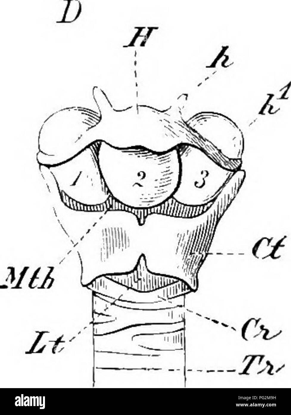 Cartilage Rings Imágenes De Stock & Cartilage Rings Fotos De Stock ...