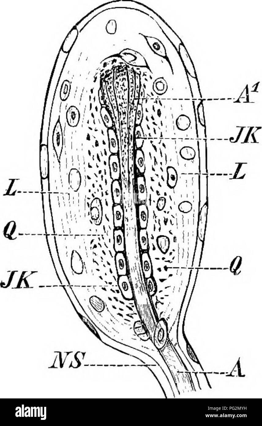 Corpus Spongiosum Imágenes De Stock & Corpus Spongiosum Fotos De ...