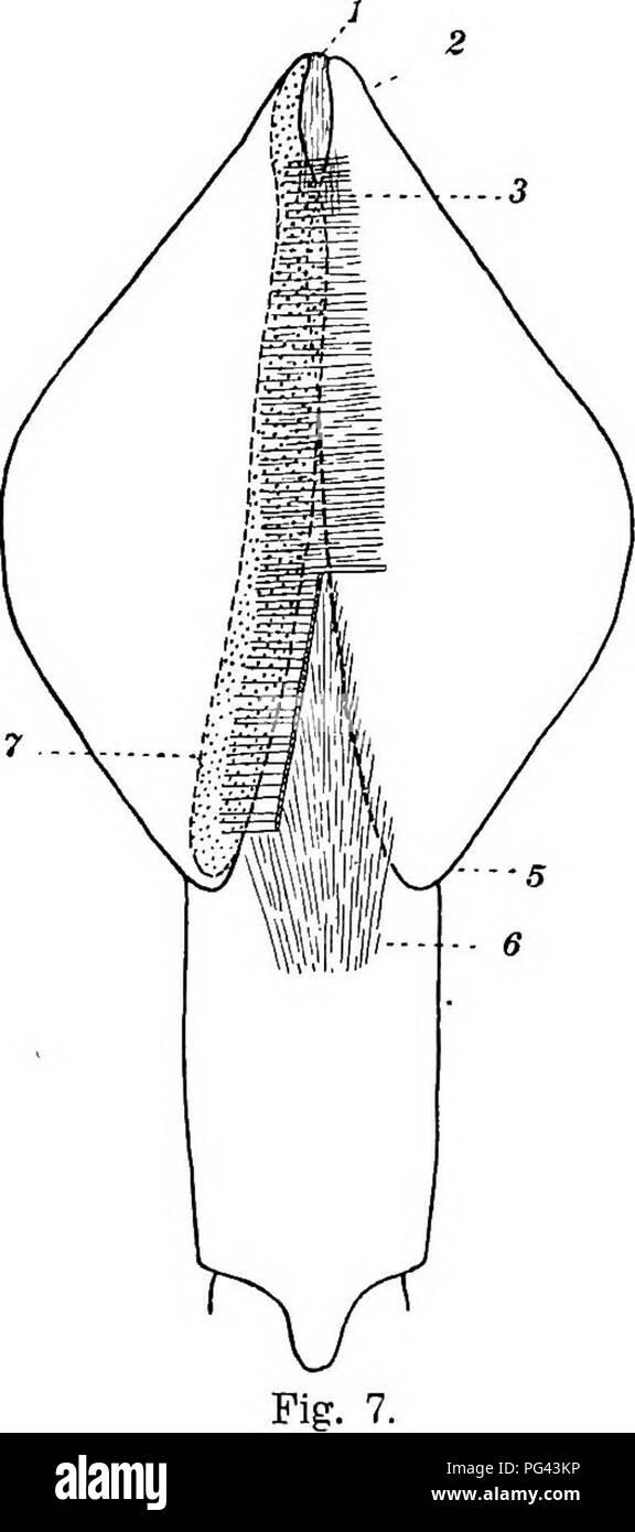 Triangular Muscle Imágenes De Stock & Triangular Muscle Fotos De ...