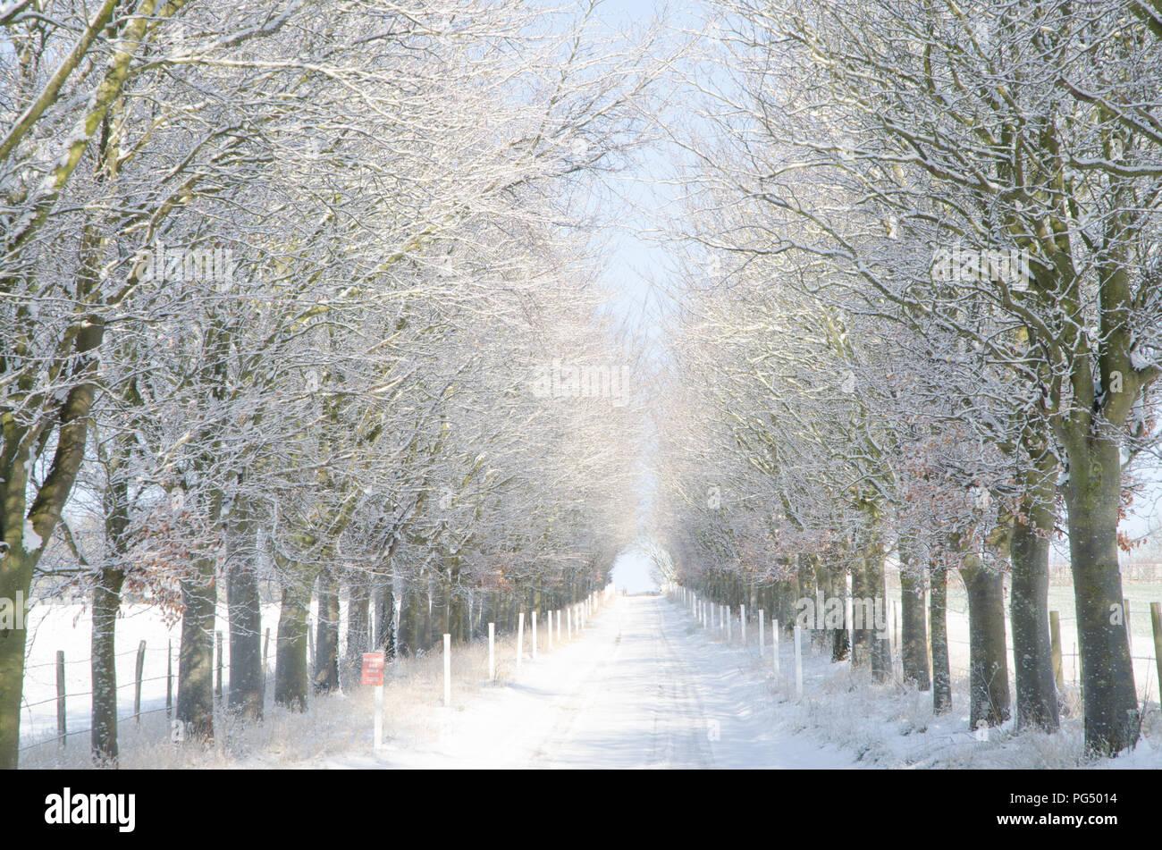Eynsford línea de árboles en la nieve. Foto de stock