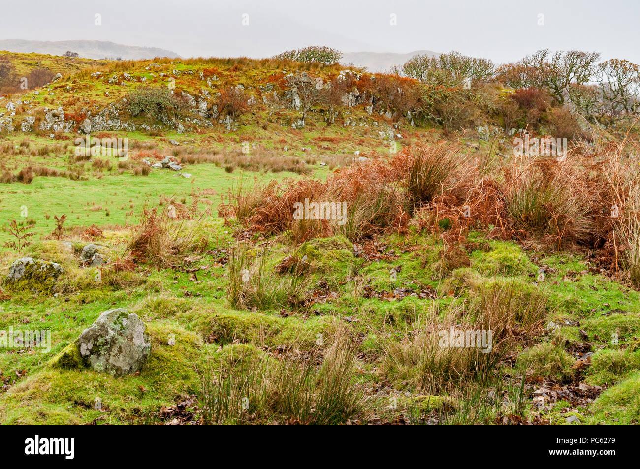 Páramo de tierra con hierba y rocas cubiertas de musgo y helechos en invierno Foto de stock