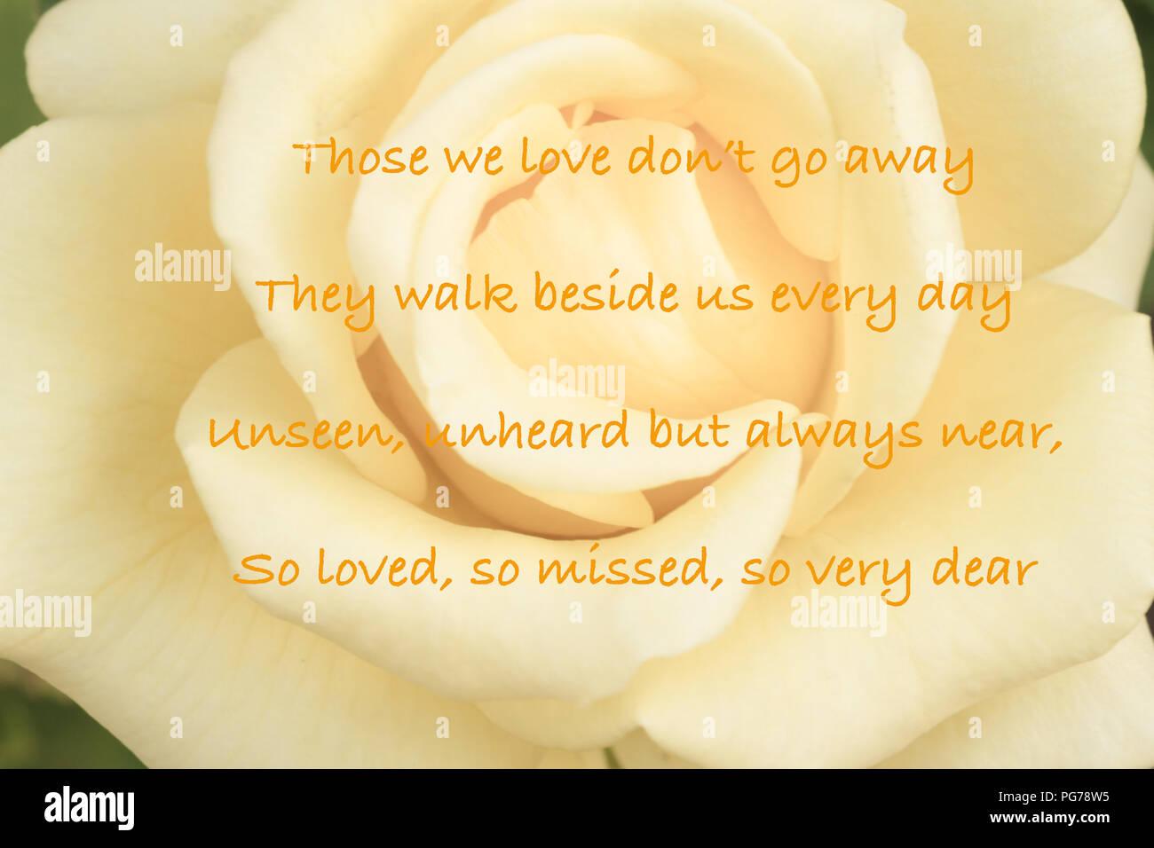 Rosa amarilla con simpatía quote Imagen De Stock