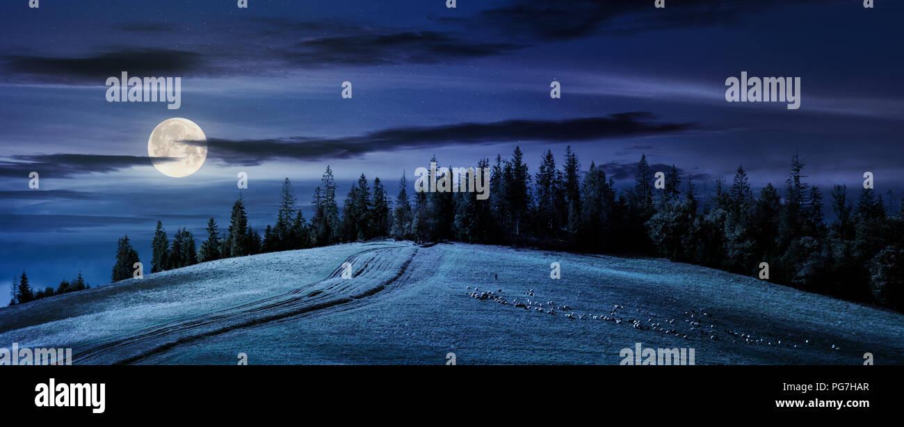 Camino Cuesta Arriba En El Bosque Por La Noche En La Luz De La Luna