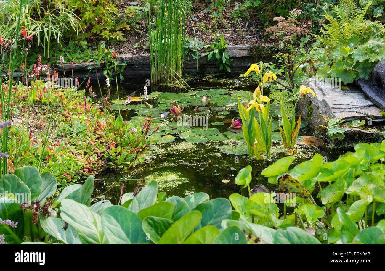 """Pequeño estanque con aristas rocosas en el Garden House, Buckland Monachorum. Canna amarillo """"Ra"""" proporciona larga floración interés. Foto de stock"""