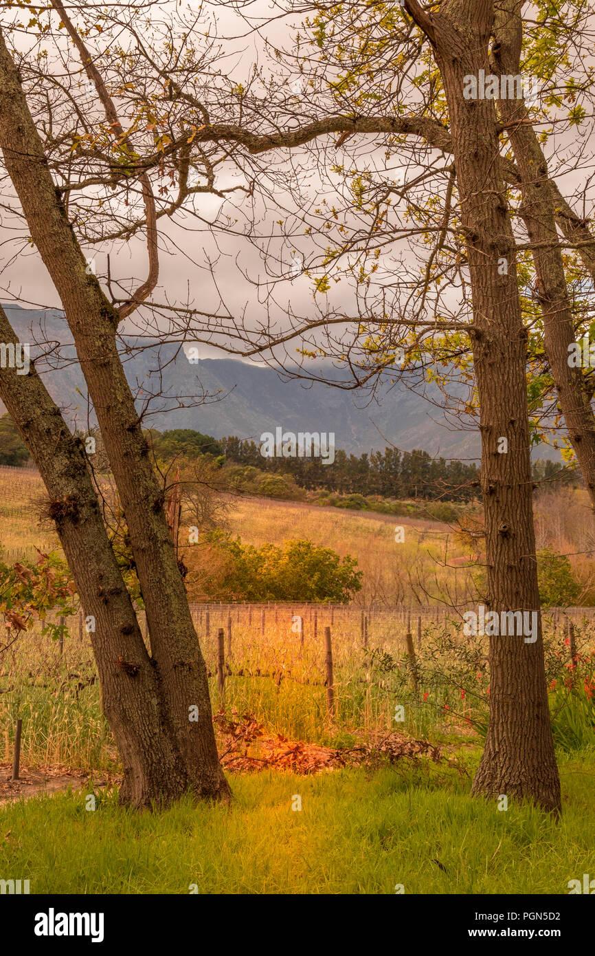 Un lugar tranquilo sobre los viñedos durante algún tiempo para mí Imagen De Stock