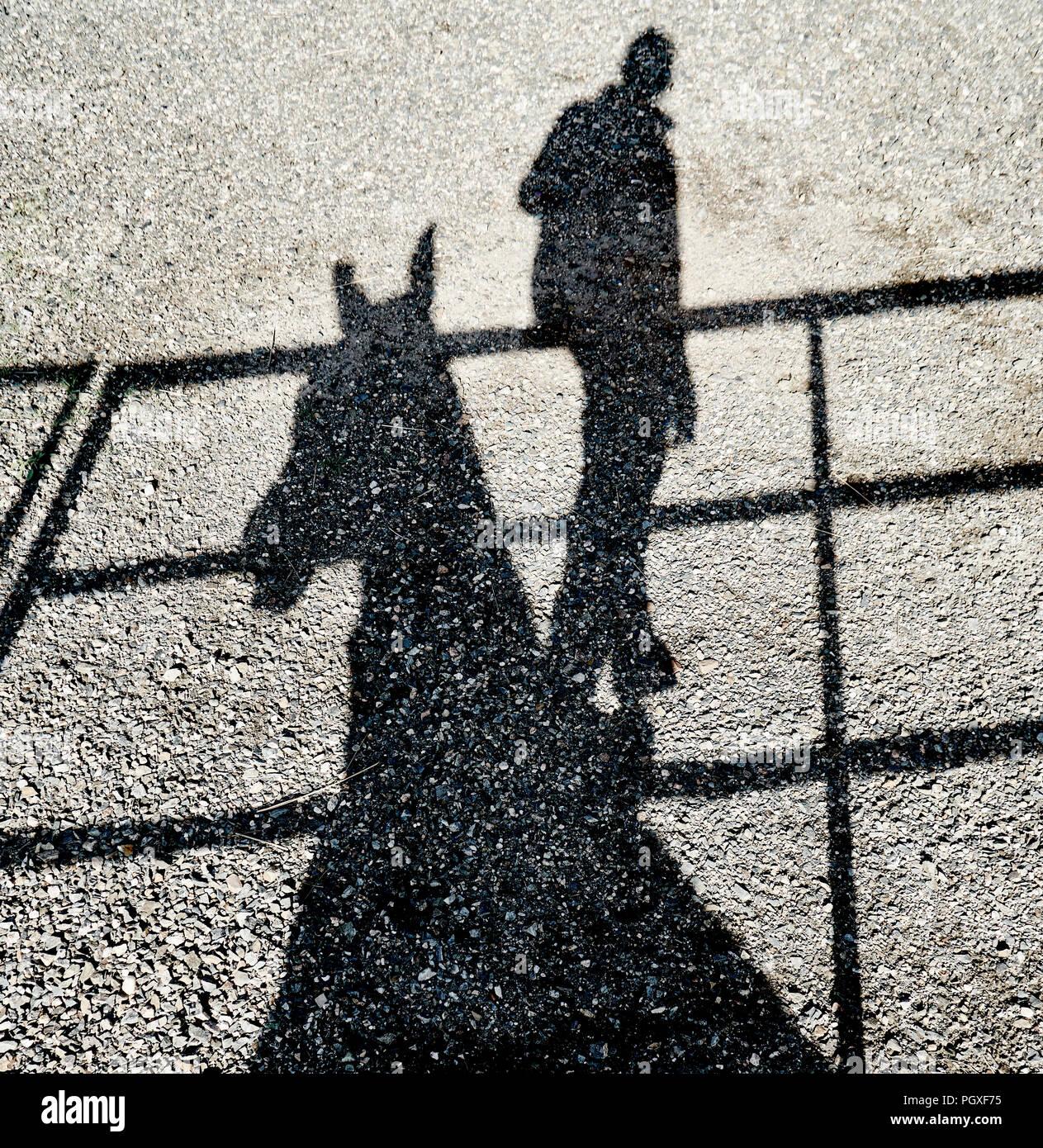 Sombra de una persona en un raíl de subirse a un caballo's neckl reflexionó sobre un suelo de grava Foto de stock