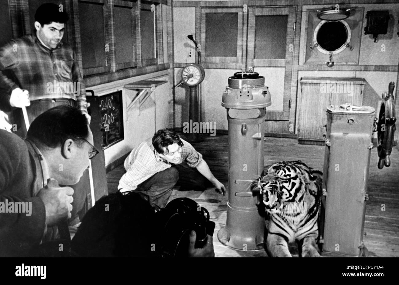 Viaje a rayas, 1961, un tigre en el conjunto Imagen De Stock