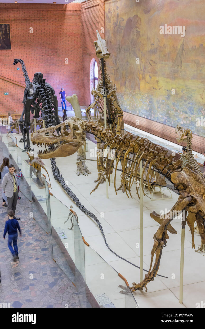 Moscú Museo Paleontológico interior, Moscú, Rusia Imagen De Stock