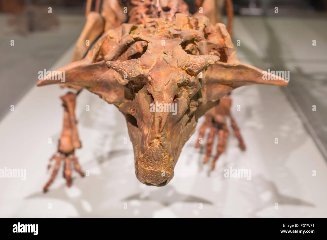 Esqueleto de dinosaurio, Moscú Museo Paleontológico, Moscú, Rusia Imagen De Stock