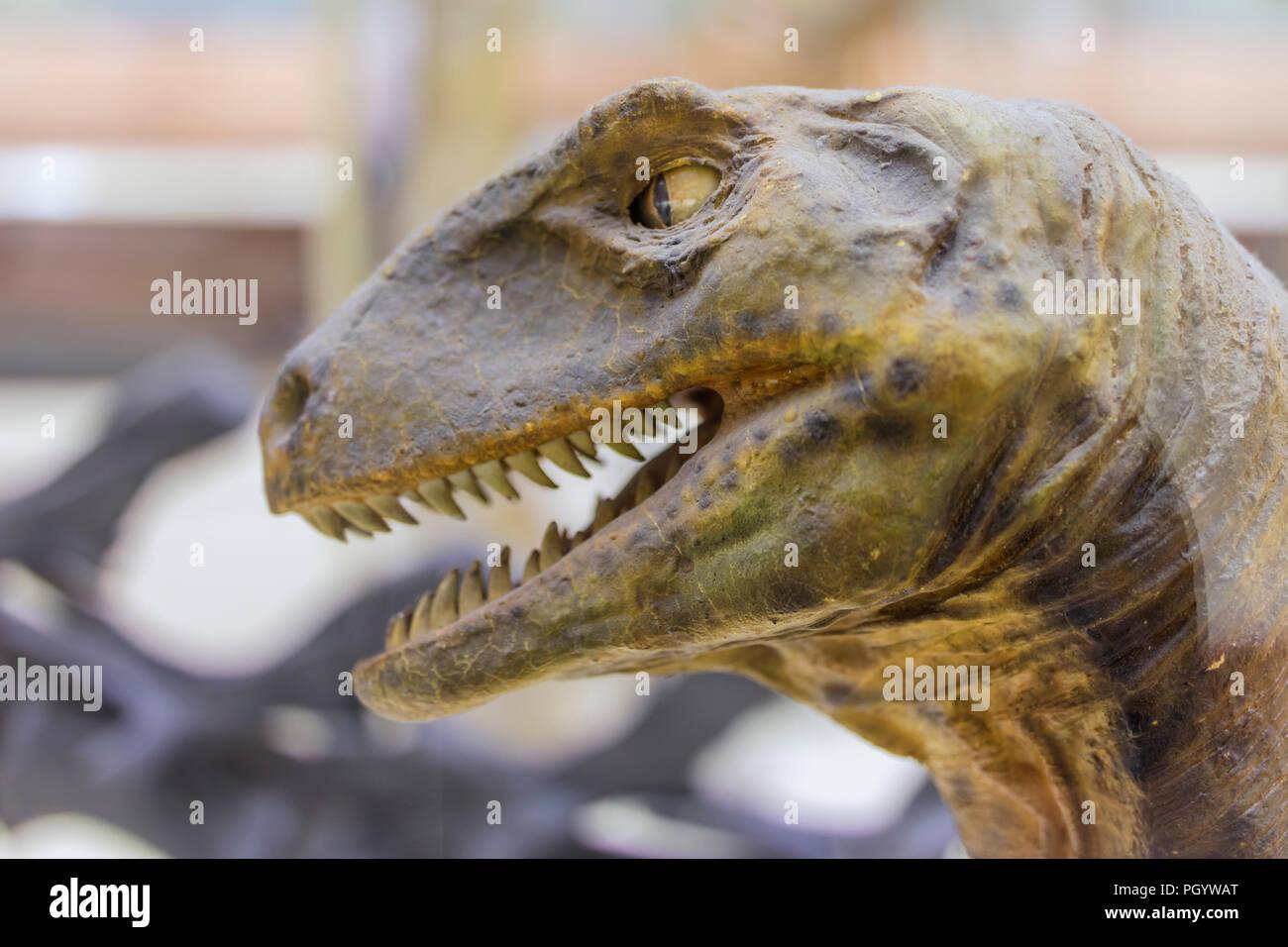 Cabeza de dinosaurio, Moscú, museo Paleontológico, Moscú, Rusia Imagen De Stock