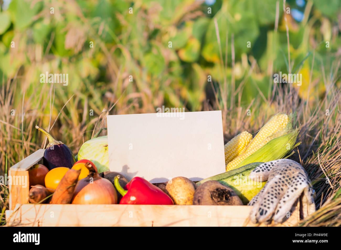 caja de embalaje lleno de hortalizas org nicas naturales signo rh alamy es