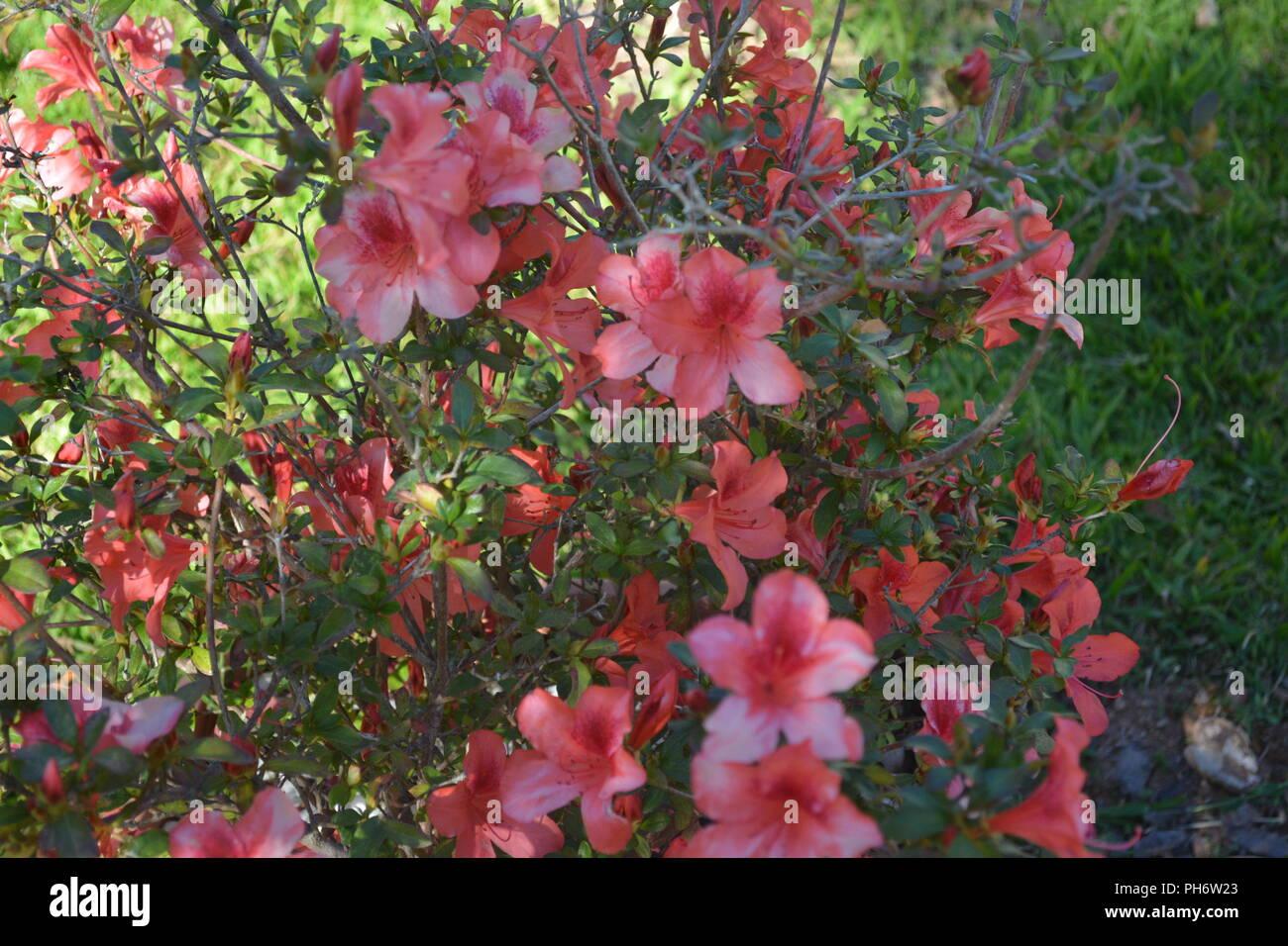 Encantadora naturaleza. La maravillosa naturaleza, cada día se nos presenta con sus colores, sus flores, y nos permite disfrutar de la vista con la belleza. Imagen De Stock