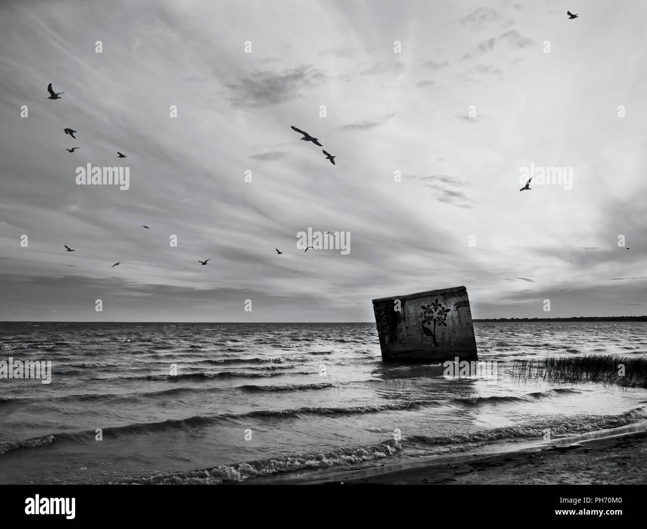 Bloack, el agua, la tierra, las gaviotas Imagen De Stock