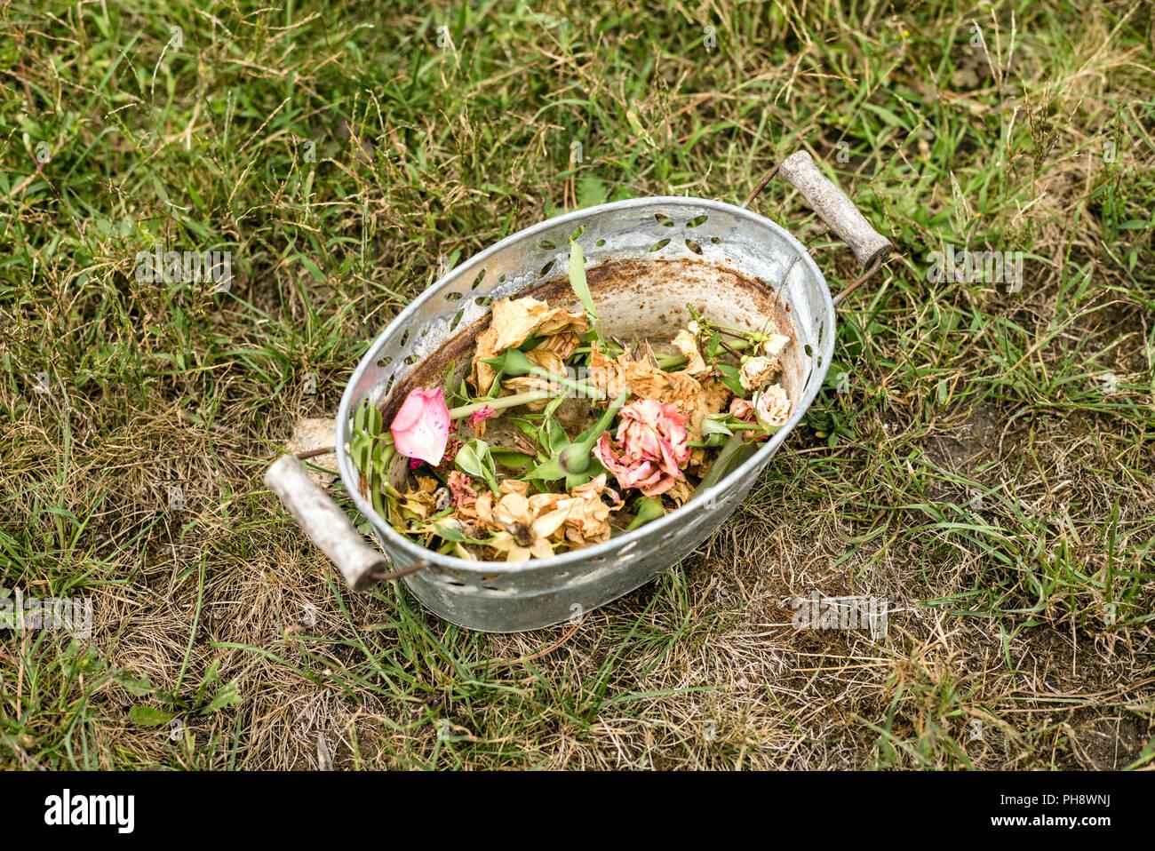 Las flores secas en un cubo Imagen De Stock