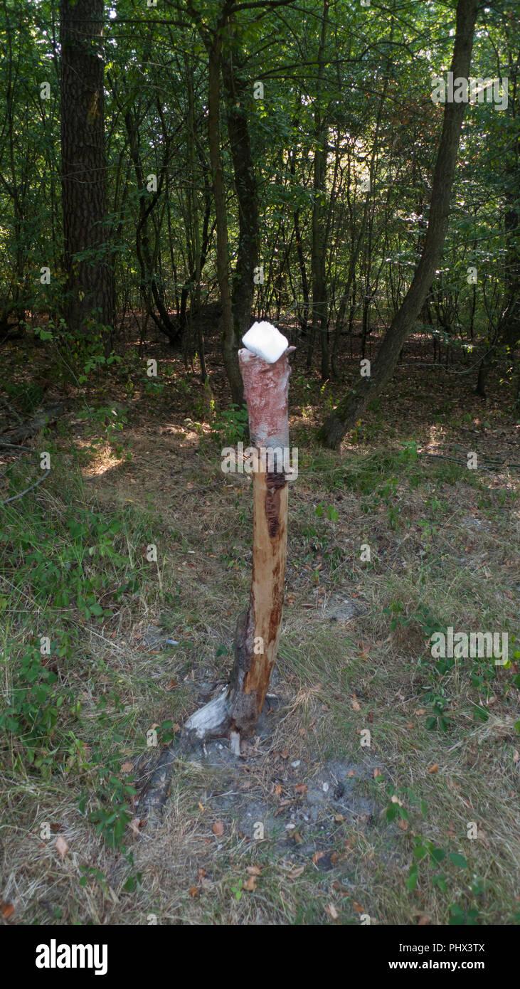 Una piedra de sal, lickstone de animales salvajes, como ciervos y venados, colocado en el tronco de un árbol en el bosque Foto de stock