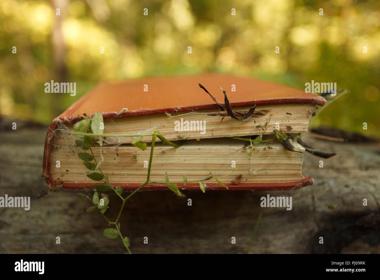 Libro hechizado con la magia de las plantas y de tela de araña, el concepto de misterio y espiritual Imagen De Stock