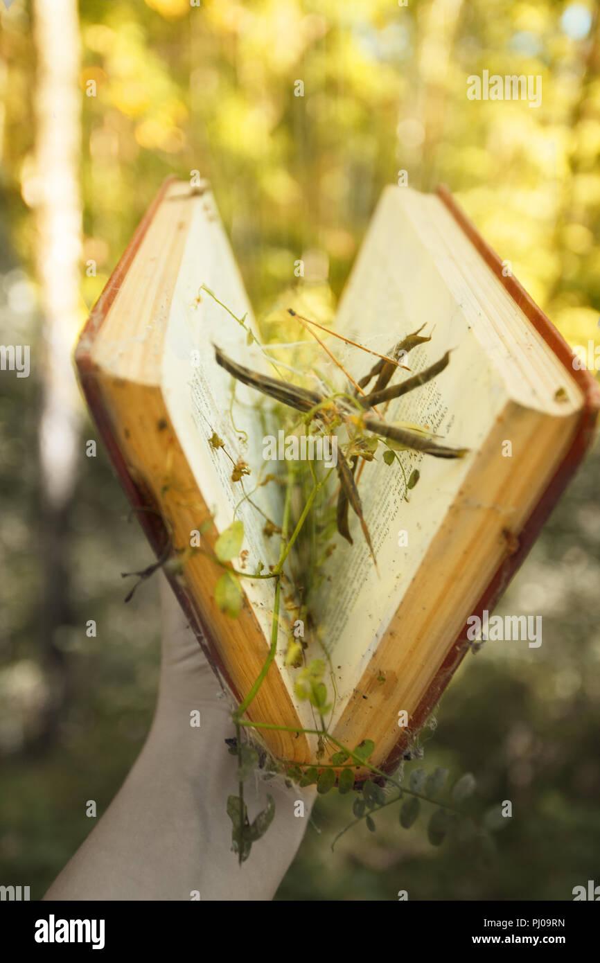 Mano sujetando abrió libro mágico con la magia de la luz. Educación, misterio, magia, concepto Imagen De Stock