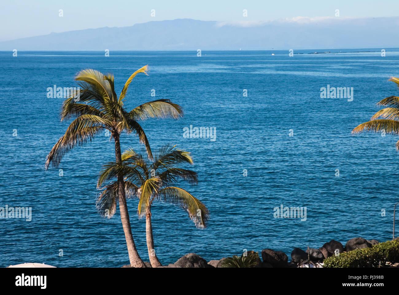Palmeras en la costa del mar. Palmeras en la costa del mar Imagen De Stock