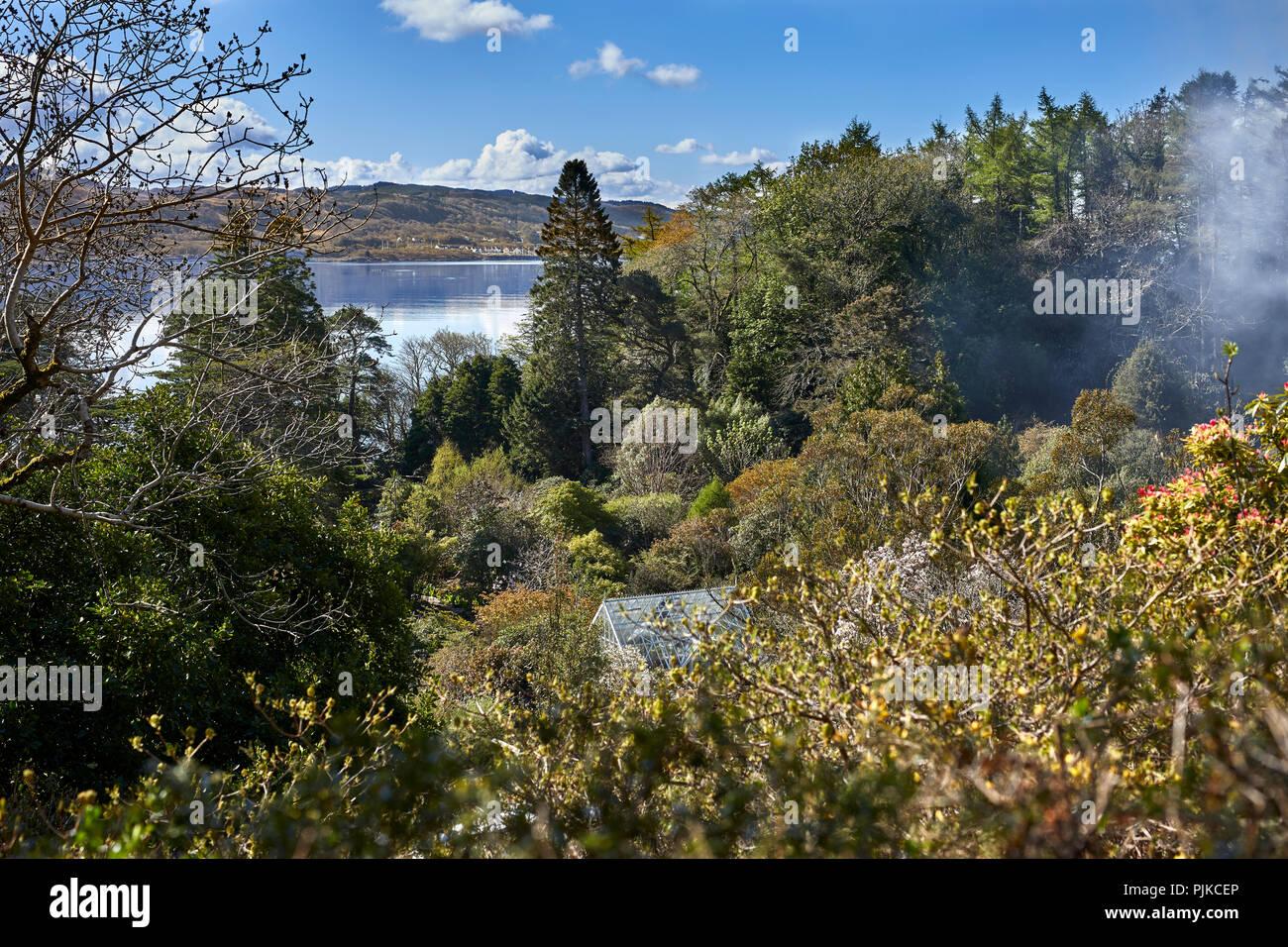 Humo de la hoguera se cuelga en las copas de los árboles en el sol por la mañana temprano para ver Craobh Haven sobre loch Melfort Arduaine a través de los jardines. Foto de stock
