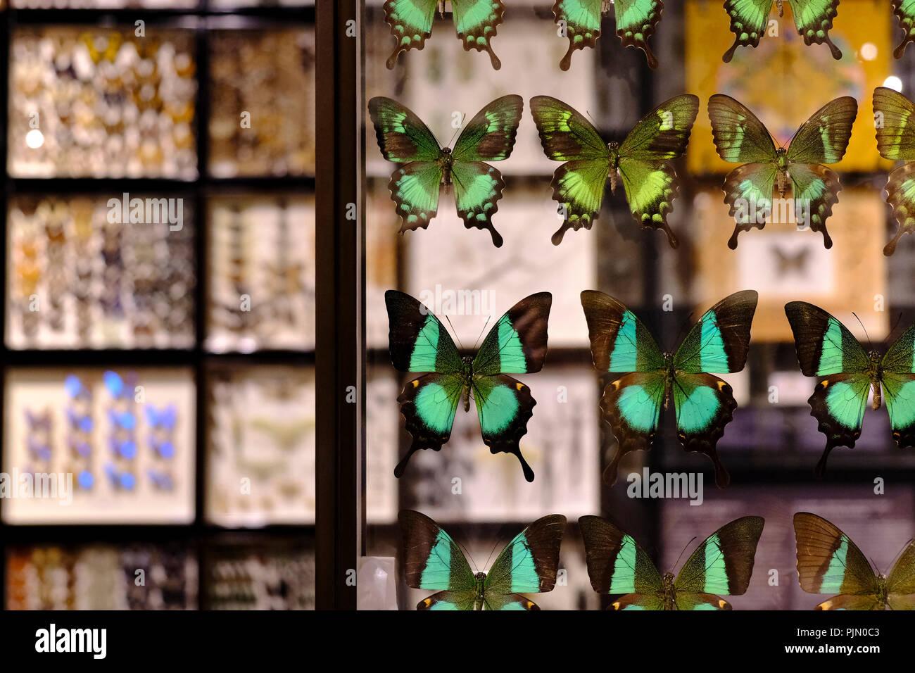 Framed Butterflies Imágenes De Stock & Framed Butterflies Fotos De ...