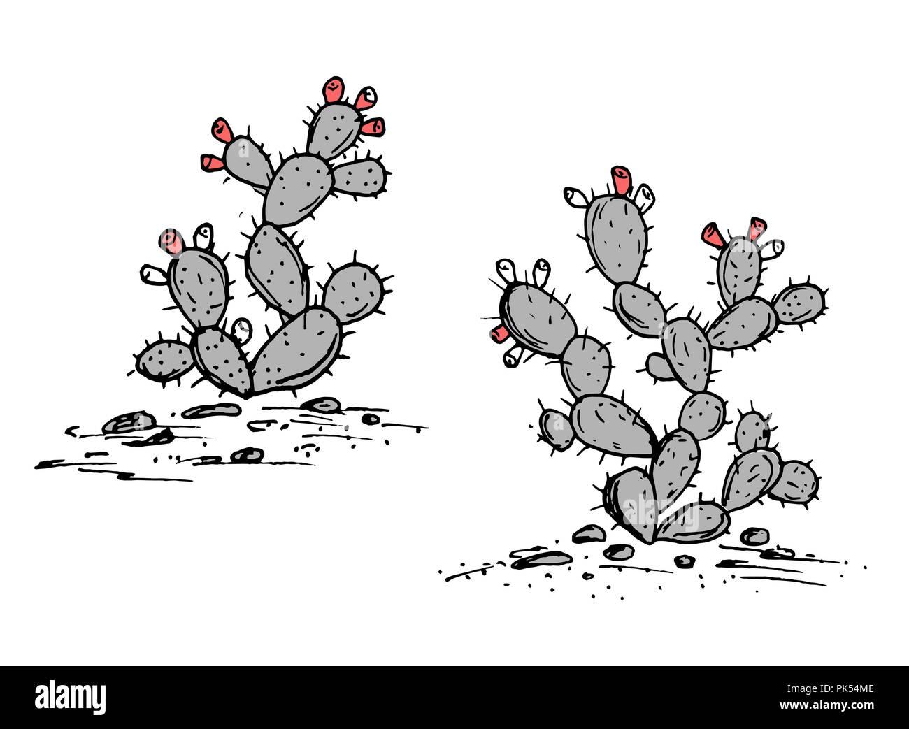 La Tuna Vector Opuntia Ficus Indica Sketch Nopales Con