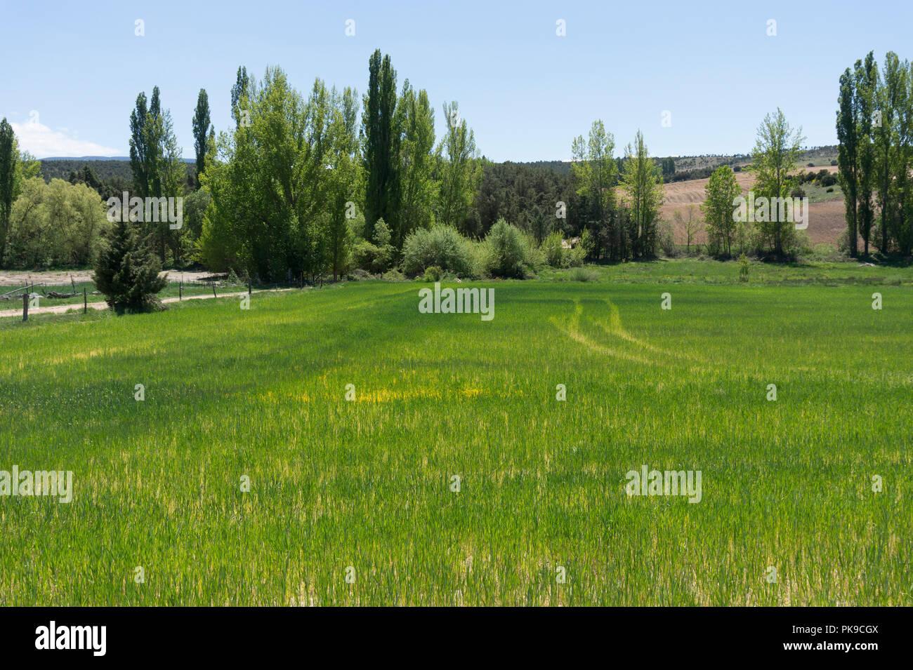 Campo en primavera Foto de stock