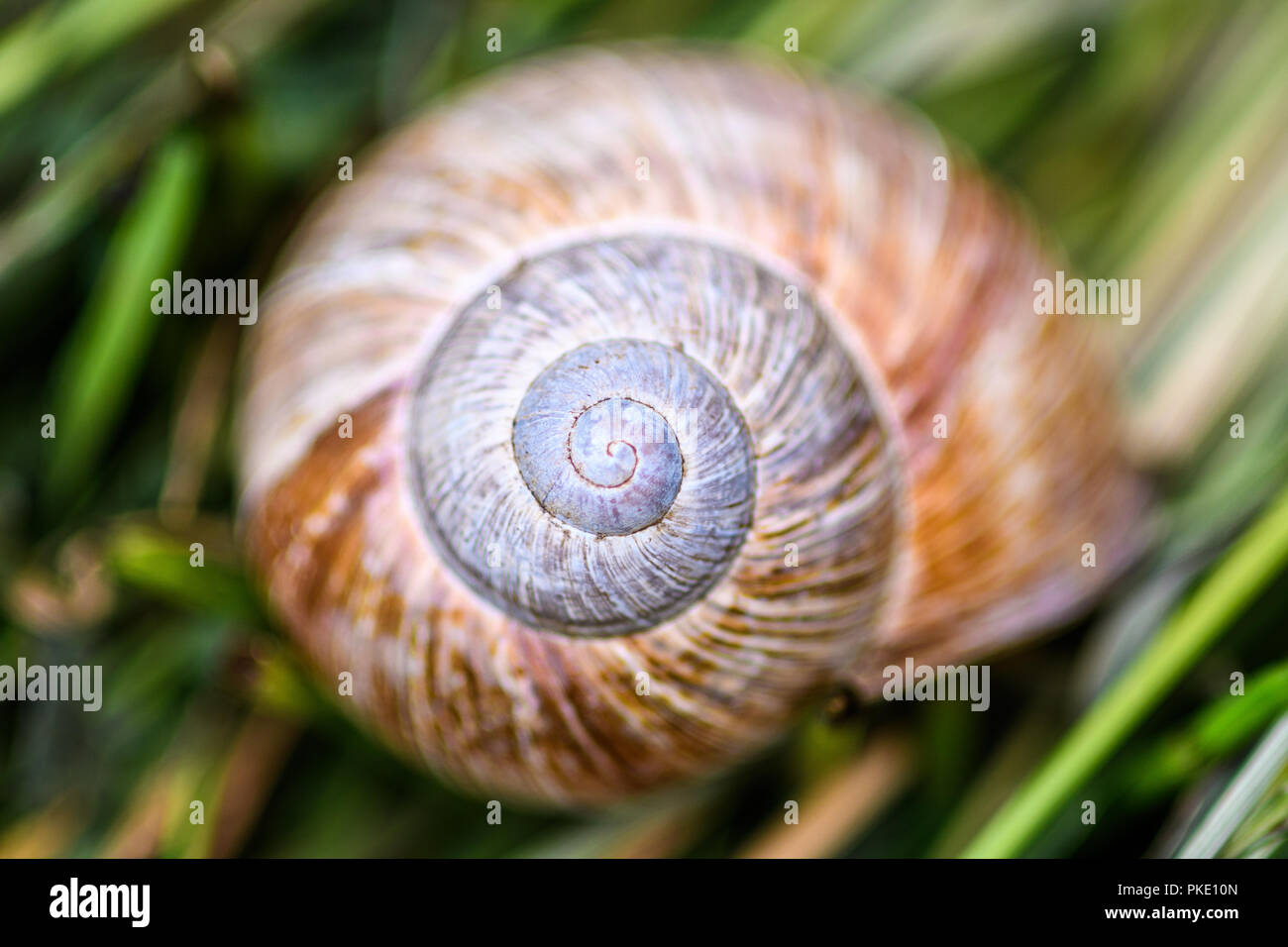 Caja de caracol en hierba Imagen De Stock