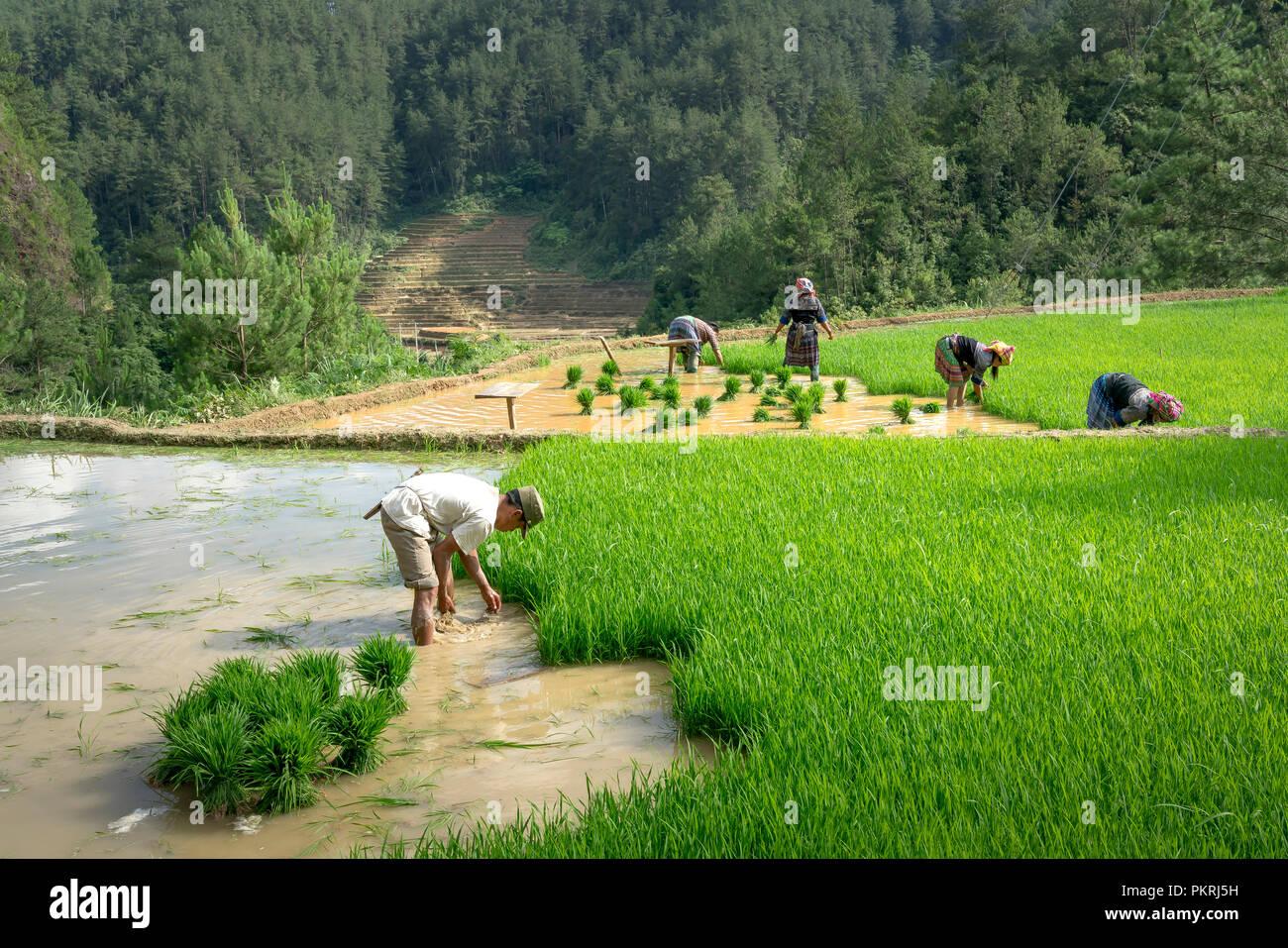 Los Agricultores De Montaña Arar Campos De Terrazas La