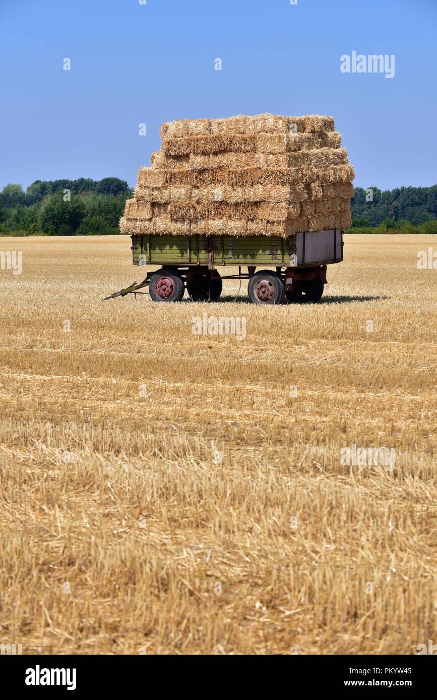 Fardos de paja en el remolque en un campo de Renania del Norte-Westfalia, Alemania Foto de stock