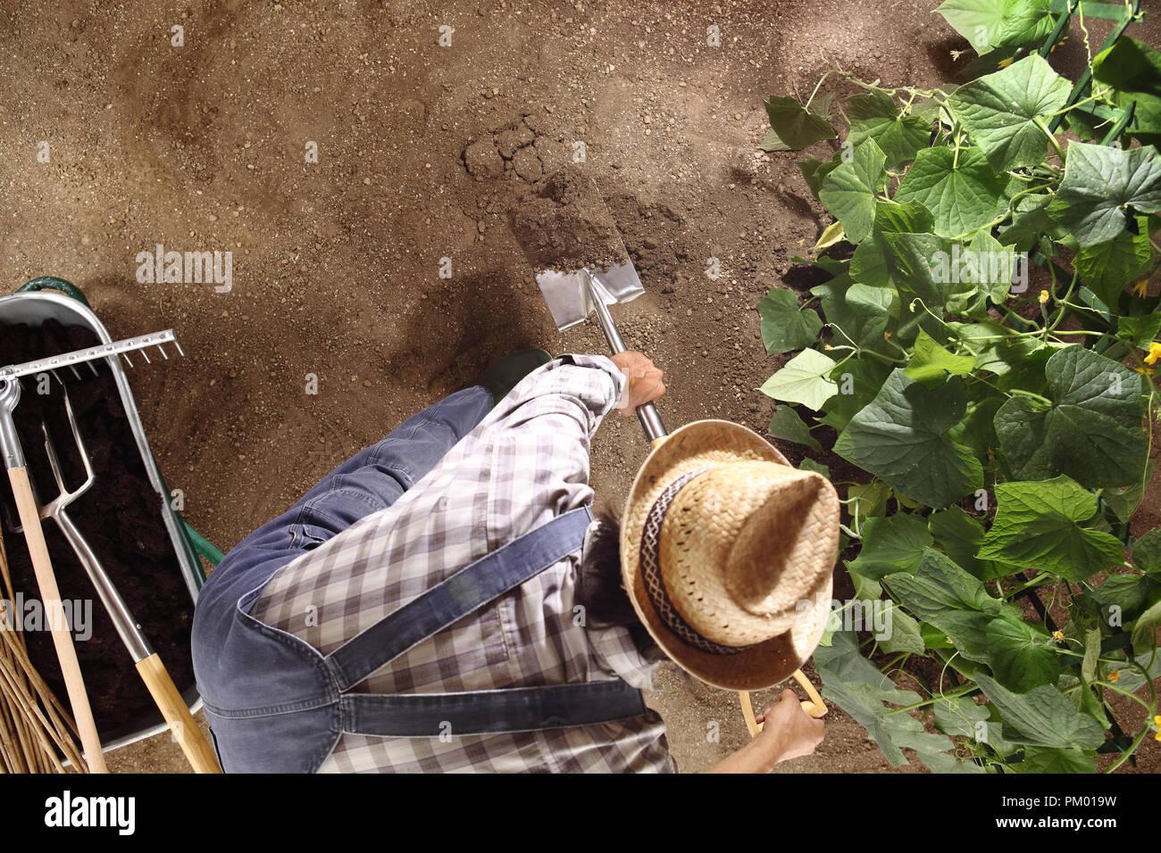 El hombre agricultor trabaja con la bayoneta en el jardín vegetal, ruptura y mover la tierra cerca de una planta de pepino, vista superior y copiar la plantilla de espacio Foto de stock
