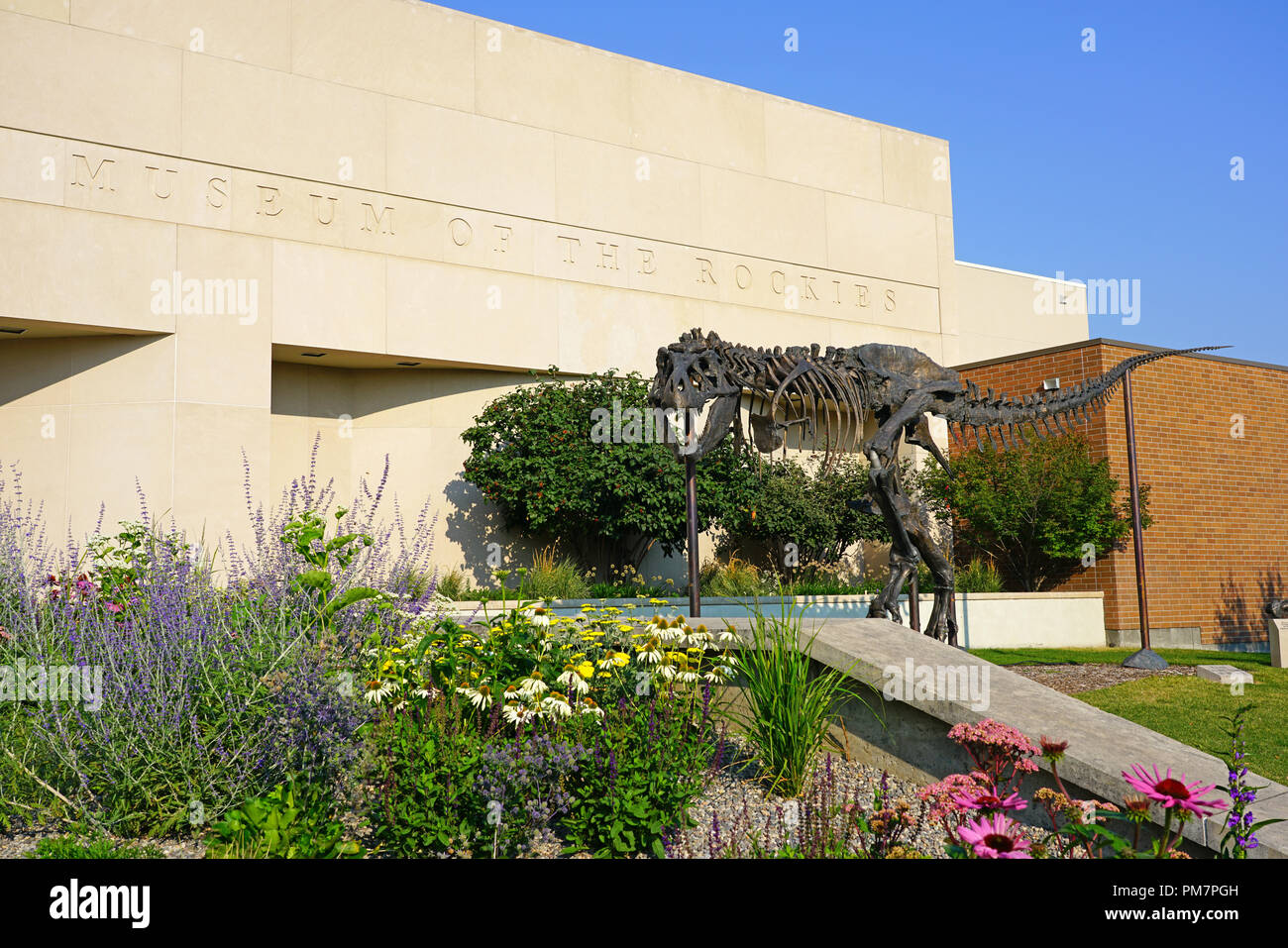 El Museo de las Rocosas, conocido por su colección de dinosaurios paleontológico de dinosaurios, en el campus de la Universidad Estatal de Montana (MSU) en Bozeman, MT Imagen De Stock