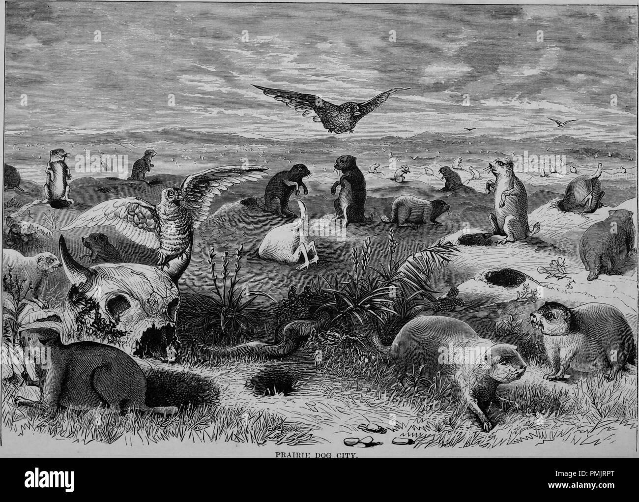 """Grabado de la Prairie Dog City, del libro """"El Turismo del Pacífico"""", 1877. Cortesía de Internet Archive. () Imagen De Stock"""