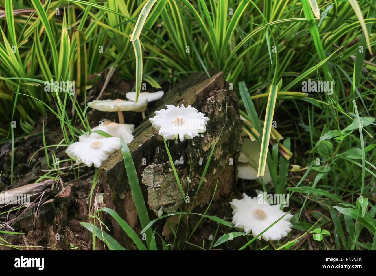 Las setas en la naturaleza hermosa en el suelo de hierba, seleccionar el enfoque con poca profundidad de campo. Foto de stock
