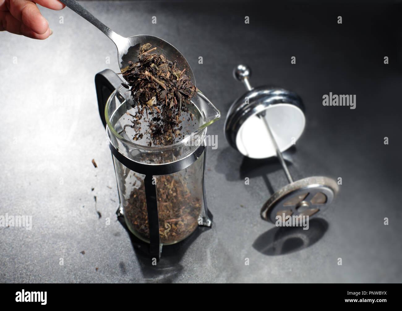 Verter el té de hierbas en la olla. Imagen De Stock
