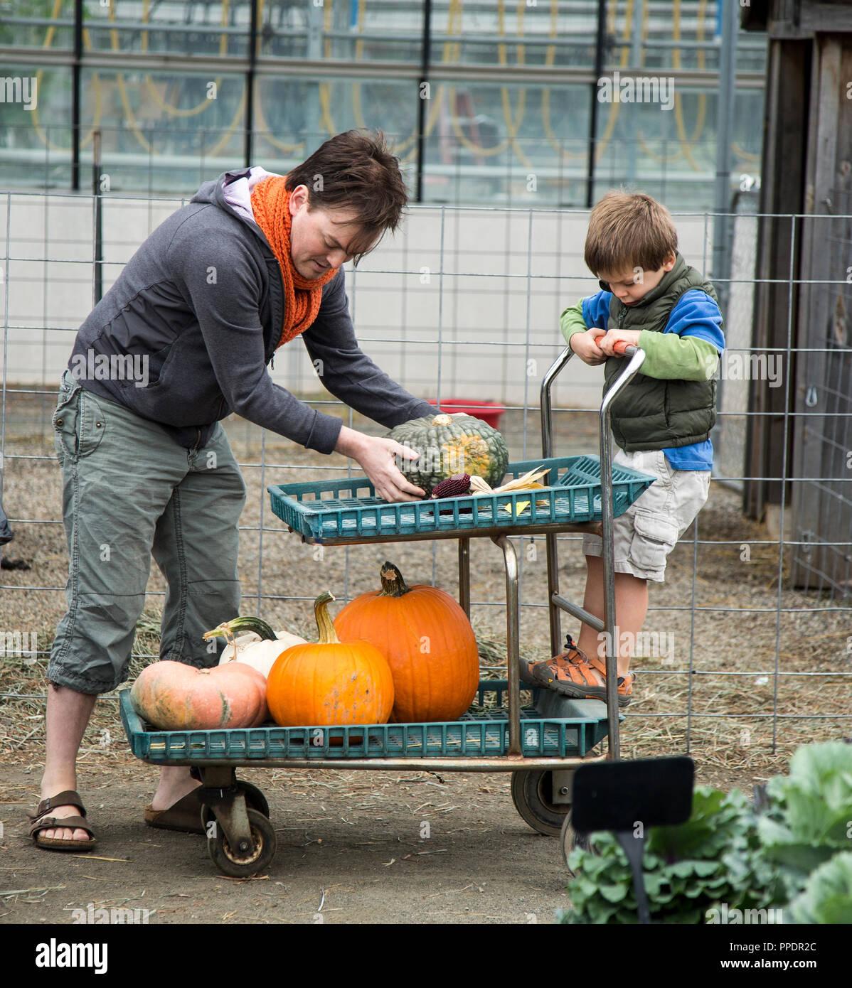 Padre ayudando a su hijo sacando las calabazas en una granja de Mahwah, NJ Imagen De Stock