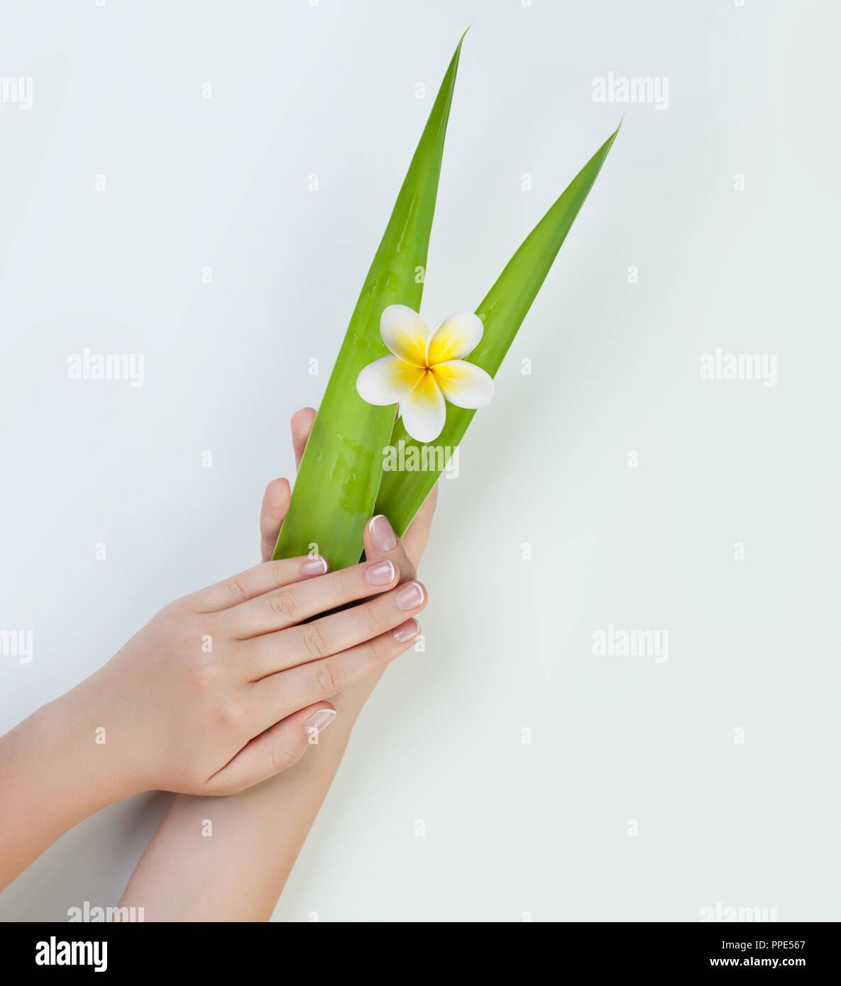 Manos De Mujer Hermosa Con Hojas Y Flores Para Spa Manicura Foto