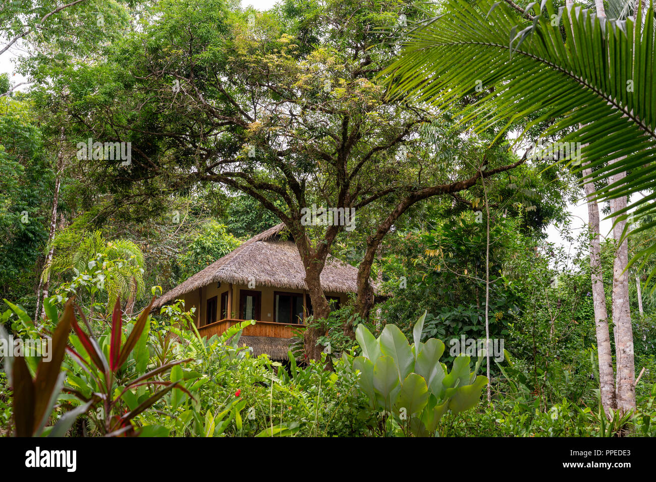 La selva tropical, el Parque Nacional Corcovado, Península de Osa, Costa Rica Imagen De Stock
